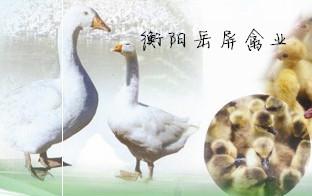湖南省衡阳市岳屏禽业