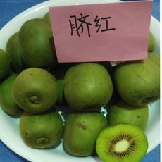 渭北经济脐红猕猴桃