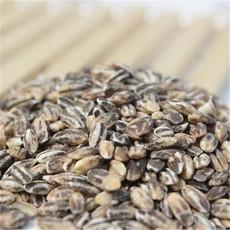 小麦种子 优质小麦种子 独家销售优质高产小麦原种