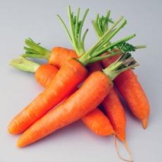 厂家直销自种新鲜胡萝卜 大量供应