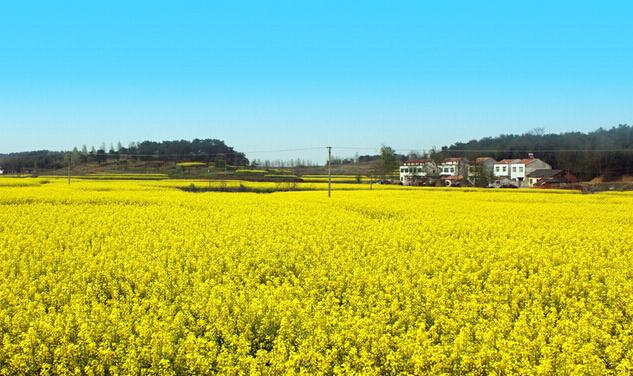 中国双低油菜科技产业园即将建设完成