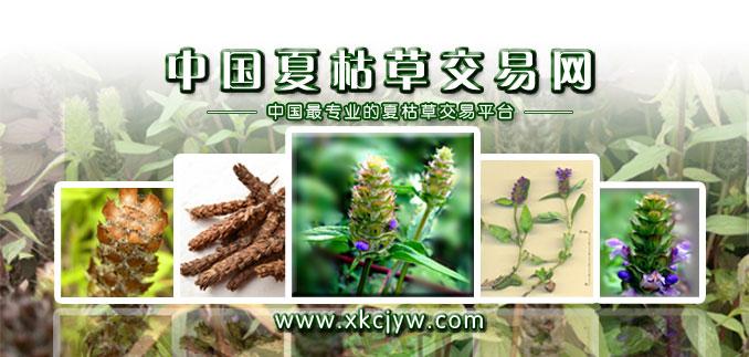 中国夏枯草交易网