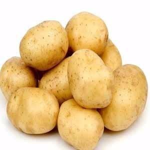 供应 绿色 无污染 无公害  马铃薯
