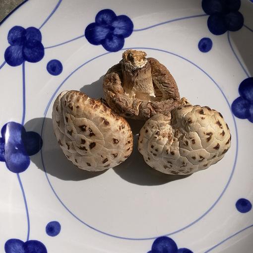 无根花菇 农家自产花菇干香菇剪脚肉厚香菇干货250克土特产