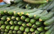绿色优质蔬菜黄瓜,新疆大棚蔬菜基地,绿色产品