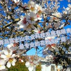 梨花粉 富士山牌优质活性花粉 品质保证 价格优惠