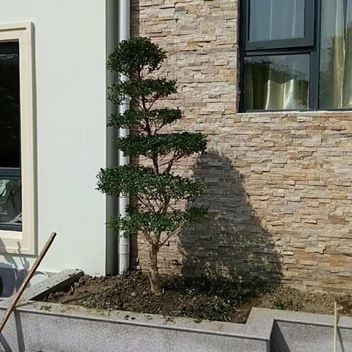 苏州高档别墅庭院园林景观绿化 苏州私家别墅景观设计 高端景观施工 造型树古桩盆景