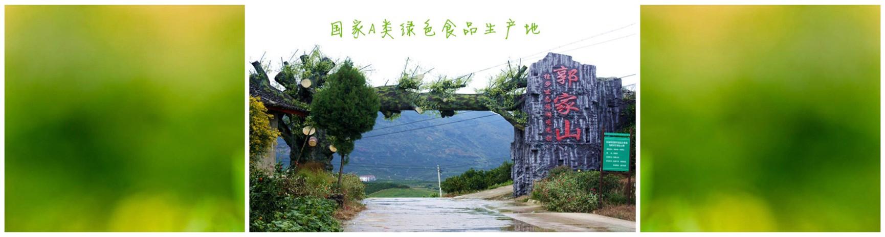 城固县郭家山村柑橘