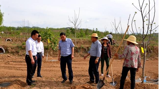 马越垠督查西灵山5万亩核桃示范园建设情况