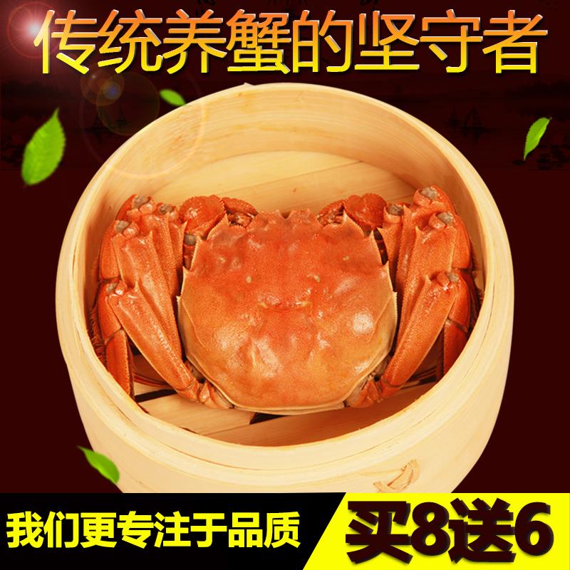 全母现货礼旺大闸蟹鲜活螃蟹2.3-2.0两10只母蟹包邮