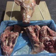 供應 進口豬頭 冷凍豬頭 法國35125002豬頭 一手貨源 正關產品