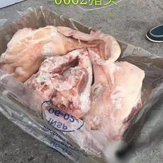 供应 进口猪头 冷冻猪头 智利06-02 整头 一手货源 正关产品