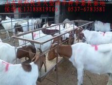 山东双利牧业销售肉羊山羊绵羊种羊苗、波尔山羊、白山羊、黑山羊、小尾寒羊、杜泊绵羊、养羊成本利润分析