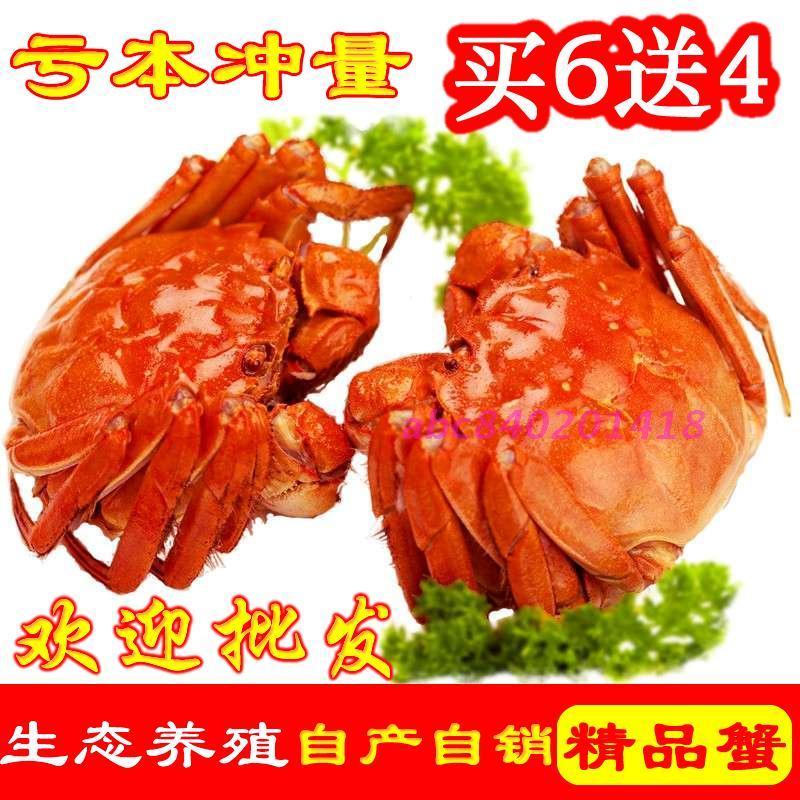 现货正宗阳澄湖大闸蟹鲜活公螃蟹4.0-3.5母蟹3.0-2.5两10只礼盒装