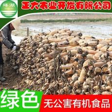 厂家直销脆藕排骨藕汤 绿色农家产品新鲜蔬菜泥巴藕