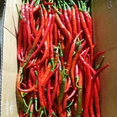 供应新鲜上市青红线椒 种植辣椒面积2万多亩