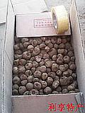 四川云南花魔芋种子50公斤包邮