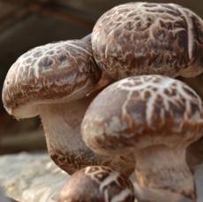 特级花菇 香菇干货河南特产农家自种冬菇500g  泌阳花菇