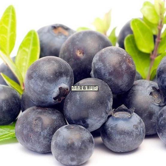 蓝莓浓缩汁料