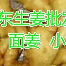 山东万亩优质大姜供应出售