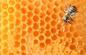 蜂蜜供应 养胃护嗓进口蜂蜜