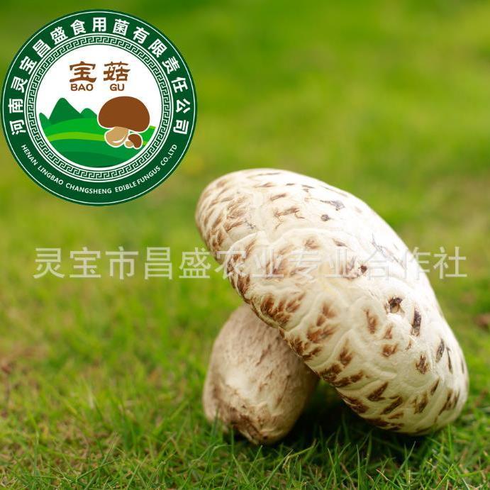 昌盛宝菇精品特大天白花菇宝菇一号 河南特产干货 中高端礼品 厂家直销批发