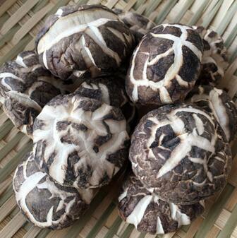 供应 新货香菇上市 秋栽花菇