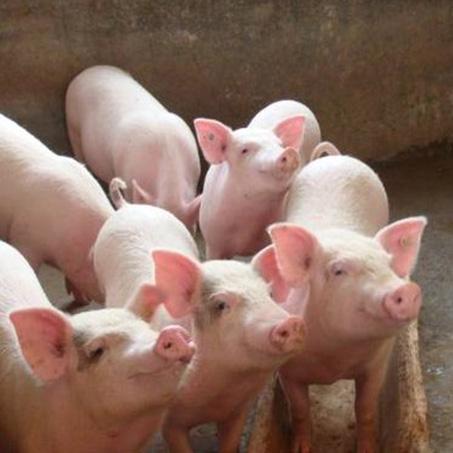 重庆市涪陵区倪必红生猪养殖场