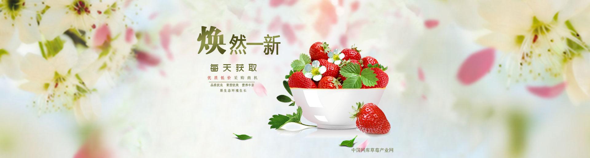 草莓产业网