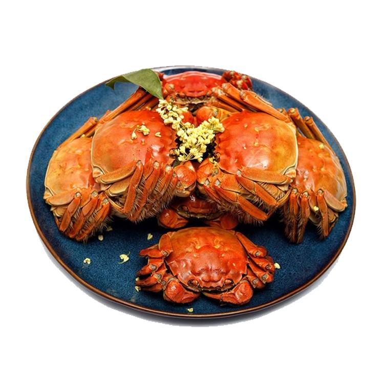 现货固城湖大闸蟹3.5两公蟹2.5两母蟹 肥膏王大闸蟹鲜活螃蟹 3对6只礼盒装包邮