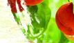 桃之星正宗砀山糖水黄桃罐头