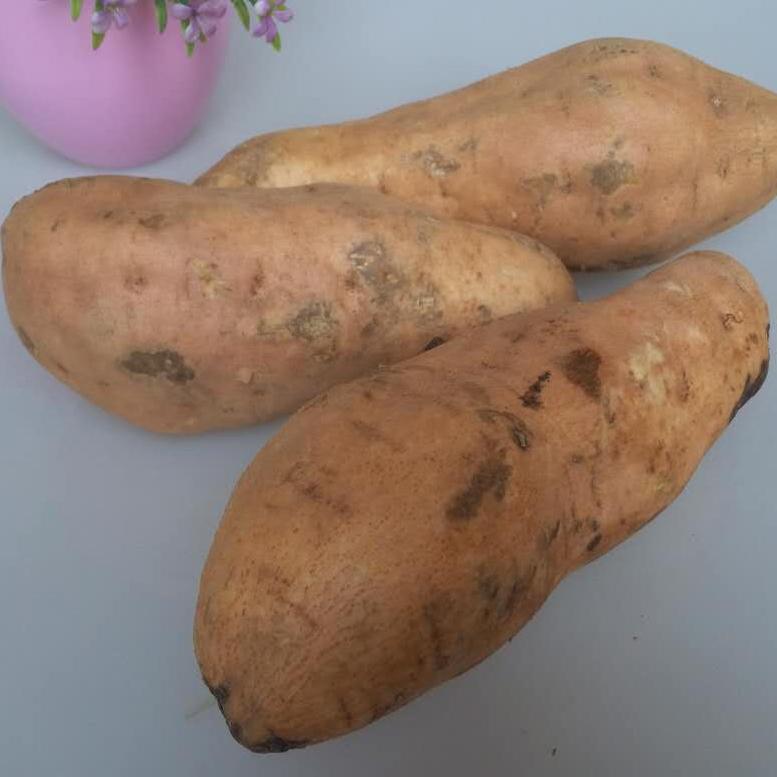 精品新鲜红薯生地瓜番薯有机山芋黄心农家自产地瓜老黄皮