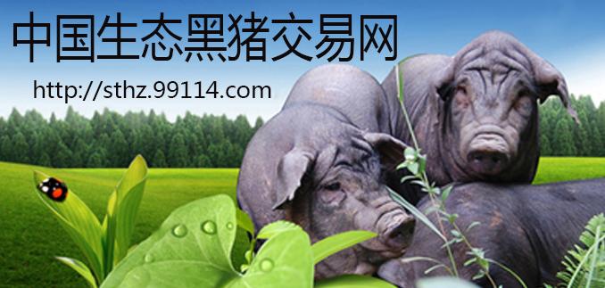生态黑猪供应商