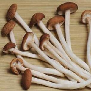 供应优质食用菌大量