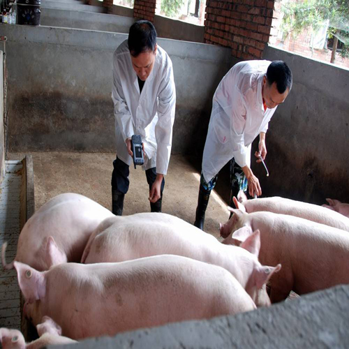 重庆市涪陵区刘光权生猪养殖场