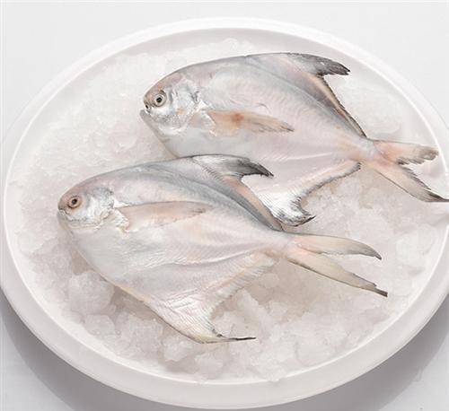 鲳鱼 万斛食品 临沂冷冻鲳鱼批发