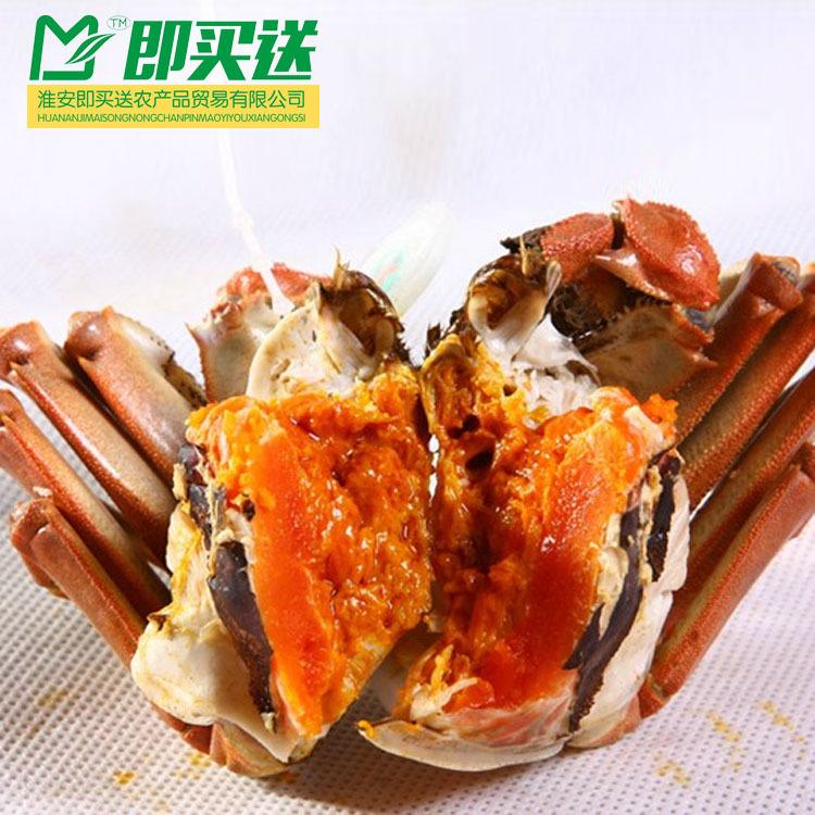 香辣蟹 洪泽湖大闸蟹 厂家直销 多肉膏黄 螃蟹鲜活现货 量大从优2