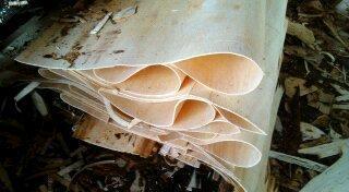 供应富胜木业松木旋切木皮