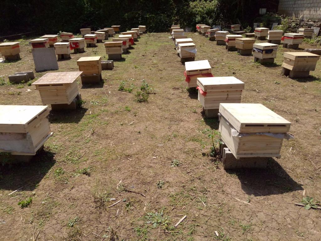 农林牧副渔 贵州中蜂出售蜜蜂养殖 个体经营