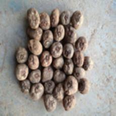 贵州黔南黔西南黔东南魔芋种子价格