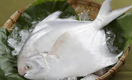 鲳鱼_万斛食品_东营冷冻鲳鱼批发