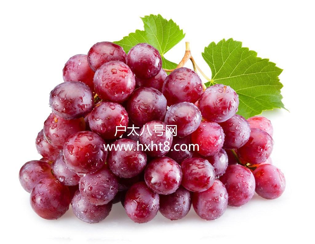 陕西户县产业园葡萄批发