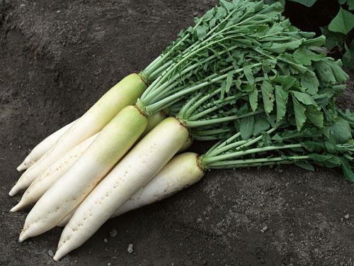 东莞地区好的蔬菜配送服务  ,龙门蔬菜配送
