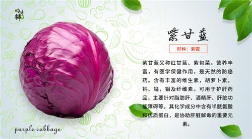 天津有機蔬菜、青昀初陽(圖)、天津有機蔬菜供應