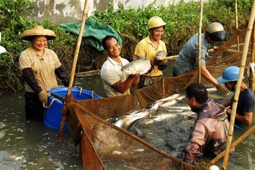 鲩鱼、 中山市渔夫水产贸易有限公司、活鲩鱼