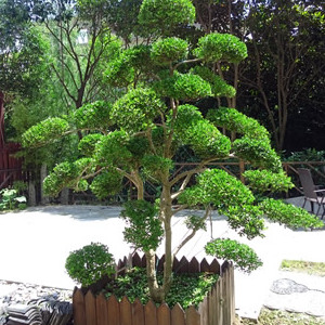 苏州别墅绿化苗木 庭院绿化设计施工 别墅景观绿化工程