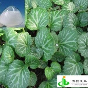 岩白菜素(虎耳草)
