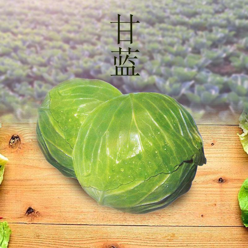 新鲜蔬菜卷心菜新鲜包菜甘蓝农家蔬菜大头菜