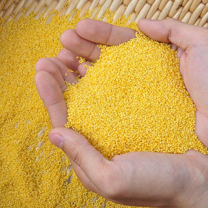 子洲富硒小米 0.5 kg 真空包装米质优良绿色无污染 正宗子洲山地小米 月子米 宝宝米