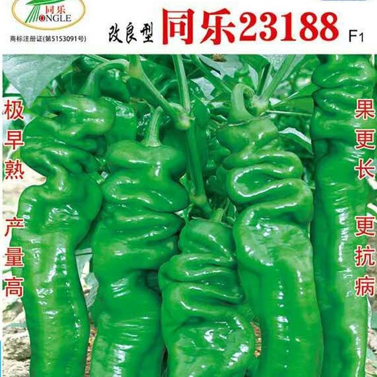 高产螺丝椒——同乐23188